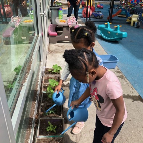 Two small girls in a preschool playground, watering small plants.